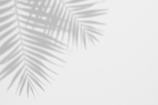 Summer background of shadows palm leaves on a white wall Premium Psd