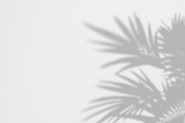 Summer of shadows palm leaves on a white wall Premium Psd