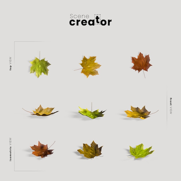 Thanksgiving arrangement with autumn leaves Free Psd