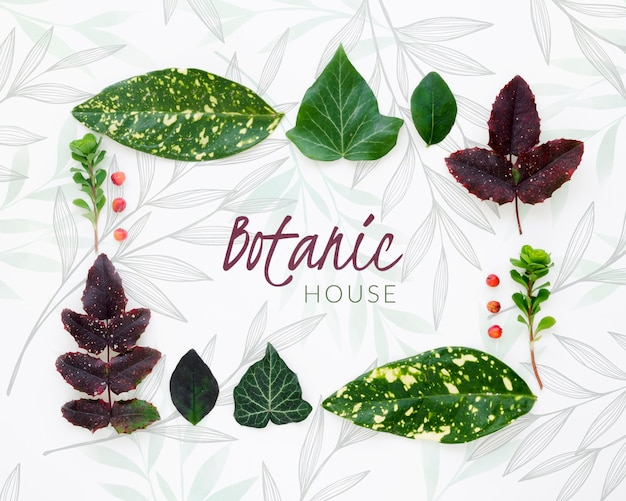 Top view botanic leaves collection Free Psd