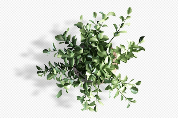 Top view branch leaf in  3d rendering isolated Premium Psd