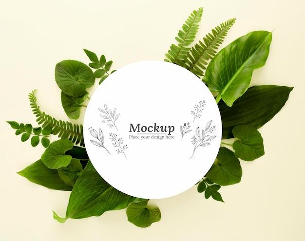 상위 뷰 녹색 잎 모형과 구색 무료 PSD 파일