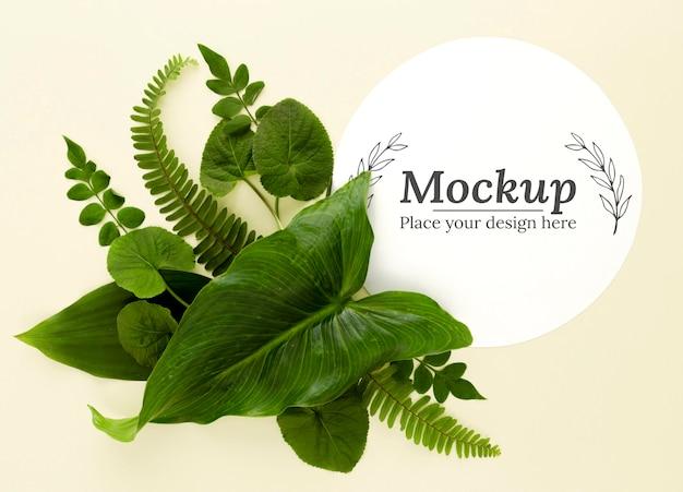 Assortimento di foglie verdi vista dall'alto con mock-up Psd Gratuite