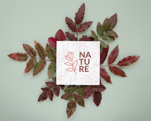 Top view nature leaves with mock-up Free Psd