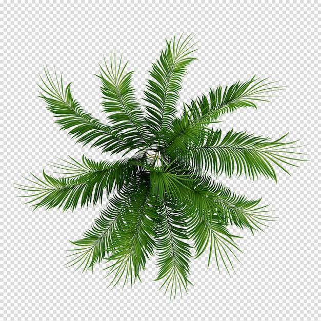 分離された3 dレンダリングでトップビューの植物 Premium Psd