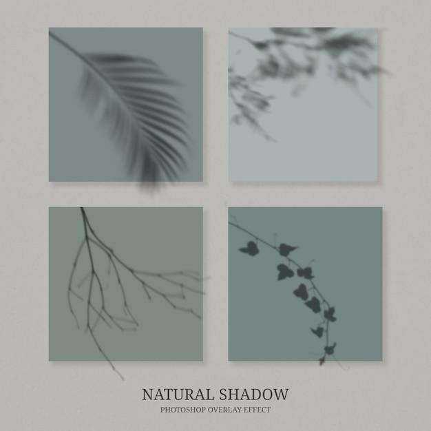 나무 잎의 투명 그림자 프리미엄 PSD 파일