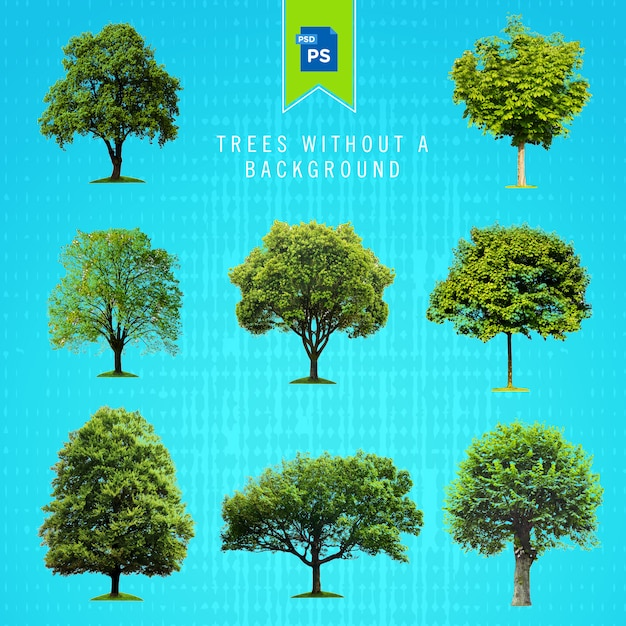 Trees isolated without a background Premium Psd