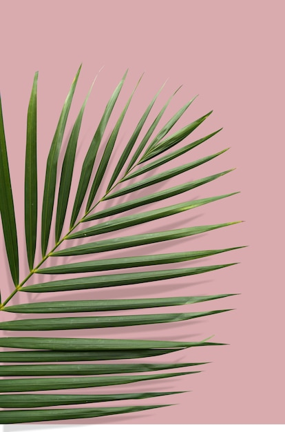 Tropical leaf with summer vibes in a pink ground Premium Psd