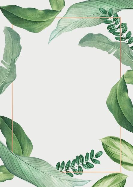 Tropical leaves frame Free Psd
