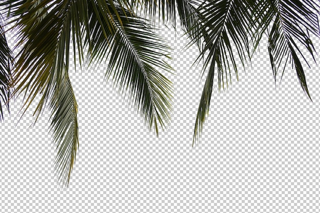 Tropical tree leaves and branch foreground isolated Premium Psd
