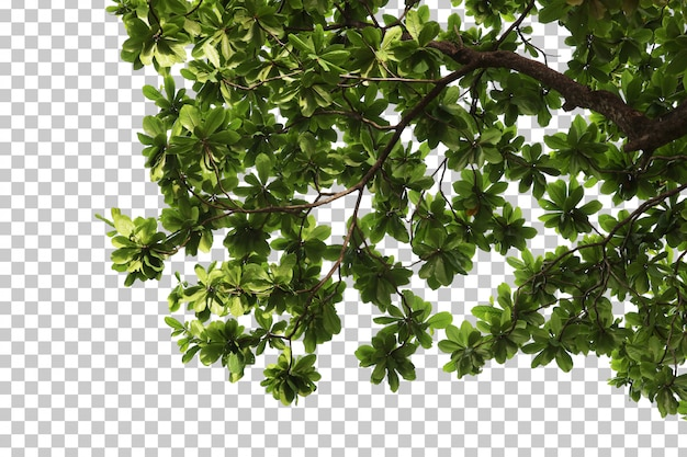 Tropical tree leaves and branch foreground Premium Psd