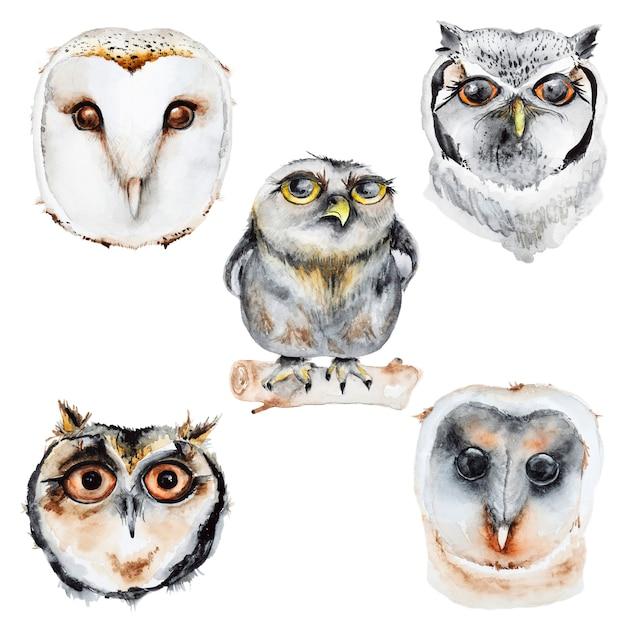 Watercolor owls set Premium Psd