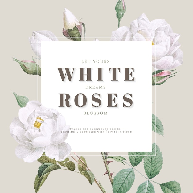 흰 장미 영감 카드 디자인 프리미엄 PSD 파일