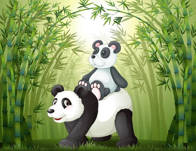 竹の森の中の2つのパンダ Premiumベクター