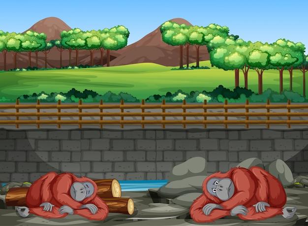動物園の2つのゴリラのシーン 無料ベクター