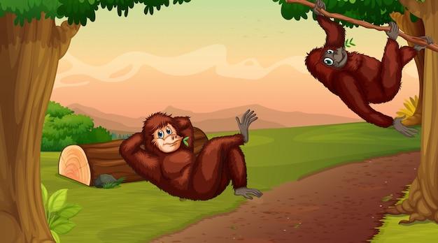 2匹のチンパンジーが木に登るシーン 無料ベクター