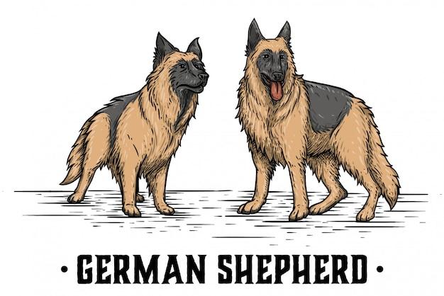2つのジャーマン・シェパード Premiumベクター