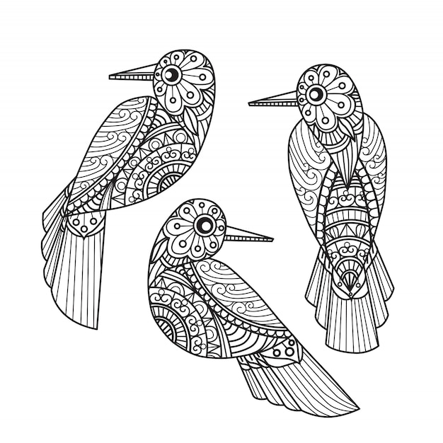 3 birds coloring pages for adults Vector | Premium Download