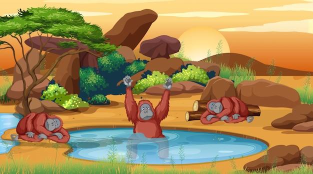 池のそばの3つのチンパンジーのシーン Premiumベクター