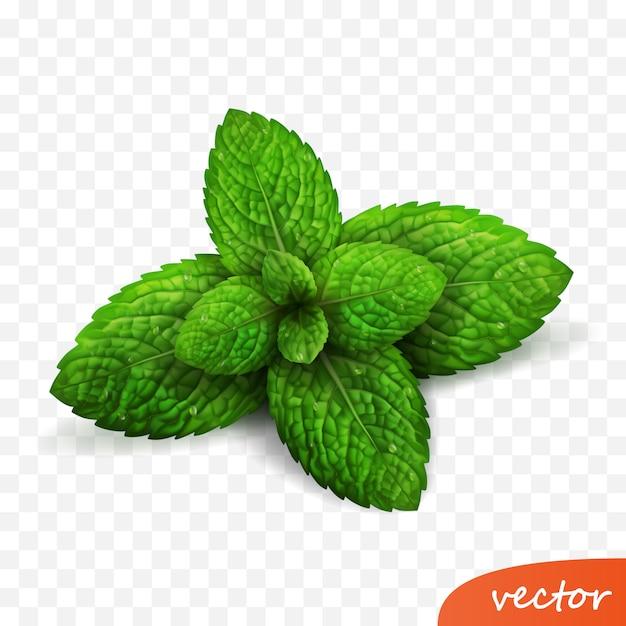3d реалистичный изолированный росток листьев свежей мяты с каплями росы Premium векторы