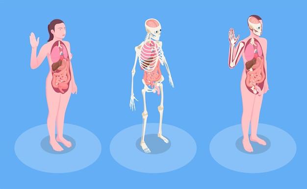 Мужские и женские человеческие тела и внутренние органы 3d изометрические Бесплатные векторы