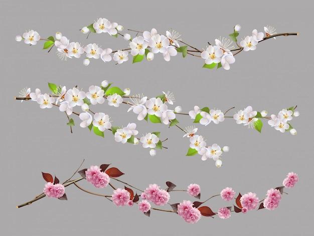 Ветвь дерева, весенние цветы 3d набор Premium векторы