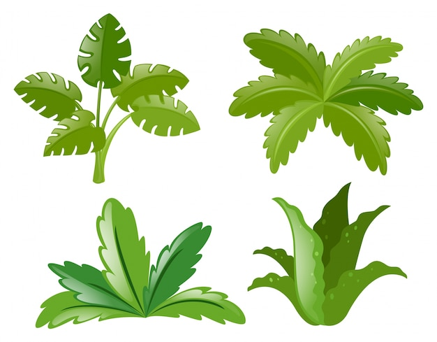 4種類の植物 無料ベクター