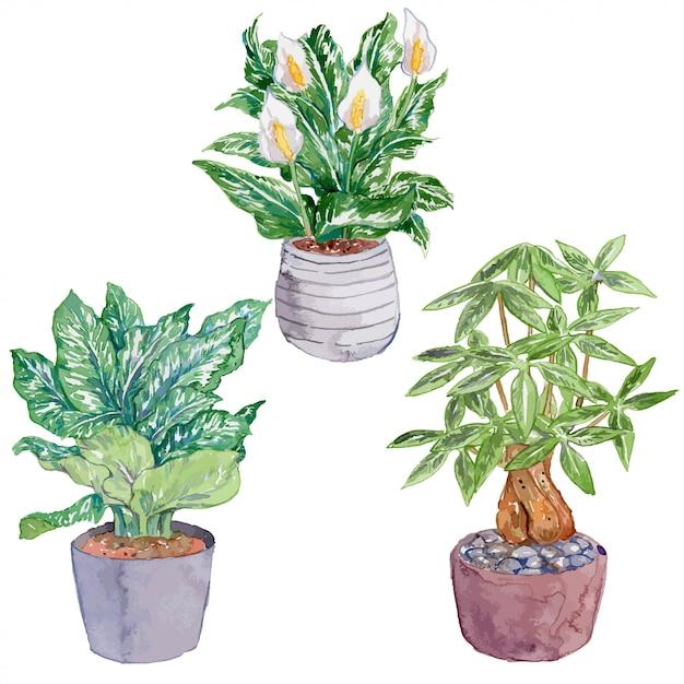 屋内植物水彩セットパート6 Premiumベクター