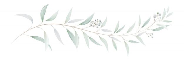 水彩ユーカリの葉と枝 Premiumベクター