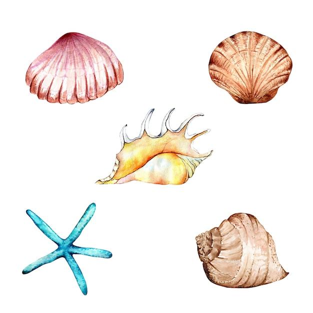 то, рисунок ракушек и морских звезд фото
