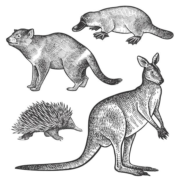オーストラリアの動物タスマニアデビル、カモノハシ、ワラビーまたはカンガルーとエキドナ。 Premiumベクター