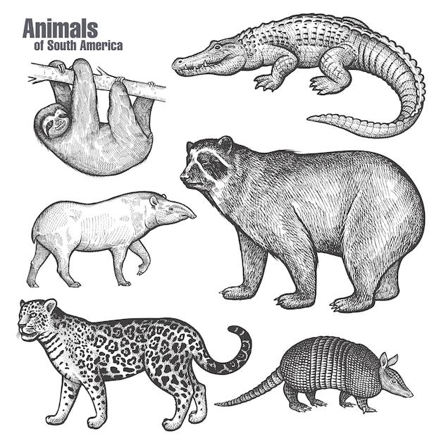 南アメリカの動物セット。 Premiumベクター