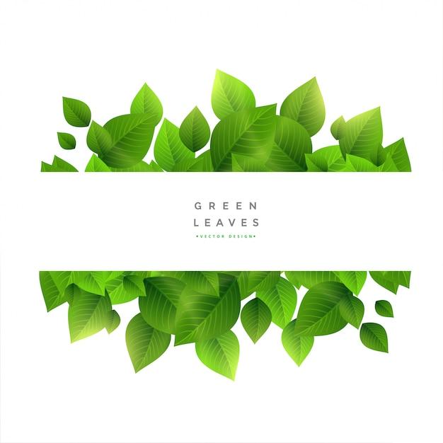 テキストスペースを持つスタイリッシュな緑の葉 無料ベクター