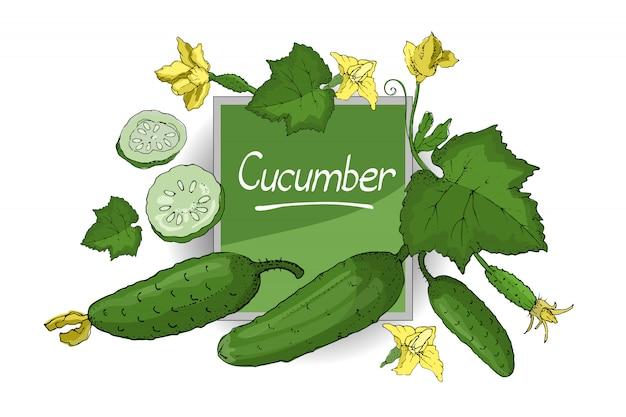 緑の新鮮なキュウリとベクトルを設定します。茎、葉、黄色い花、全体とスライスしたきゅうりを分離しました。夏の収穫 Premiumベクター