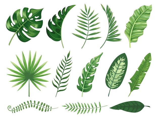 エキゾチックな熱帯の葉。モンステラ植物の葉、バナナ植物、緑の熱帯ヤシの葉分離セット Premiumベクター
