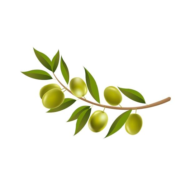 ブランチオリーブの葉で孤立した白い背景 Premiumベクター