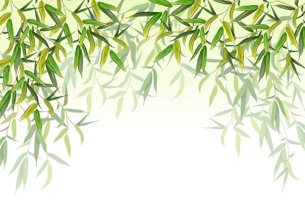 柳の枝ベクトルイラスト Premiumベクター