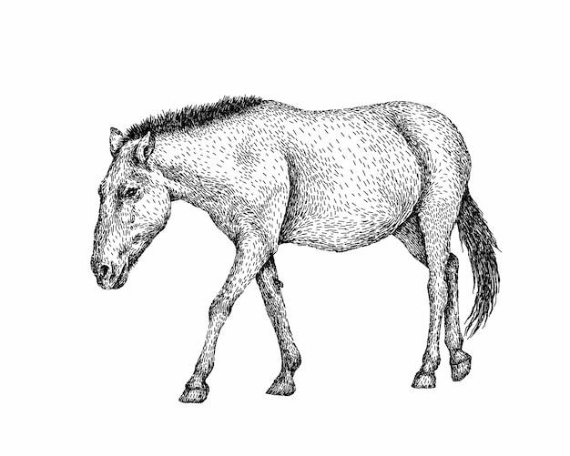 Реалистичная черно-белая лошадь на всю длину Premium векторы