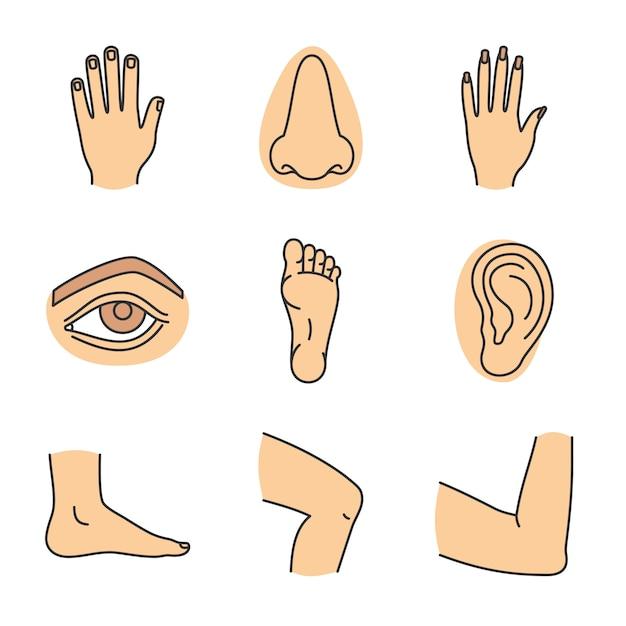 Набор иконок цвета частей человеческого тела Premium векторы