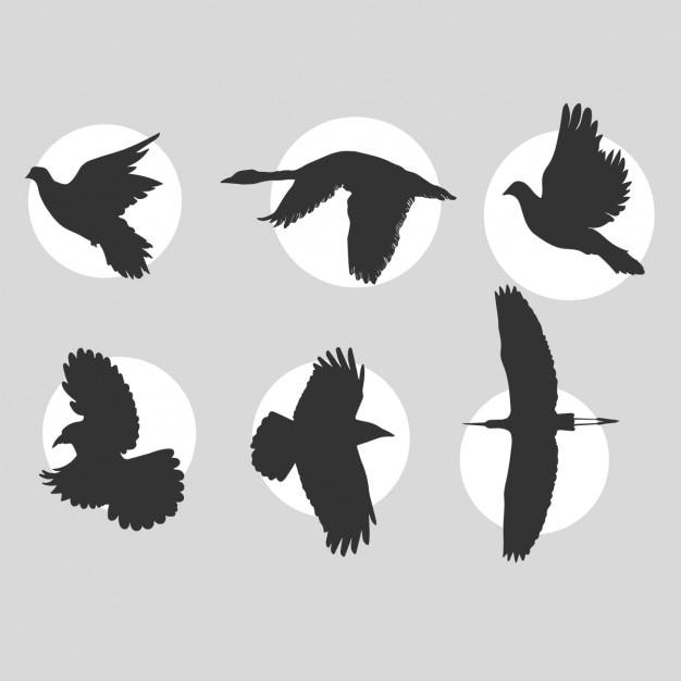 飛ぶ鳥のシルエットコレクション ベクター画像