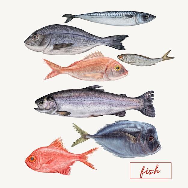 異なる詳細な魚のセット Premiumベクター