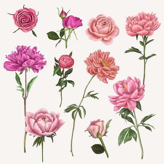 Ручной обращается векторная иллюстрация цветок Premium векторы