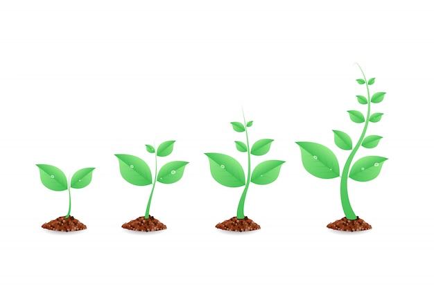 段階的な植物の成長。植栽ツリーインフォグラフィック。進化。地面に種子が芽生えます。図。 Premiumベクター
