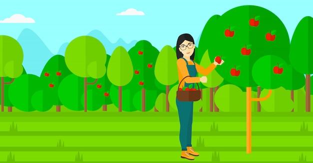 リンゴを集める農夫。 Premiumベクター