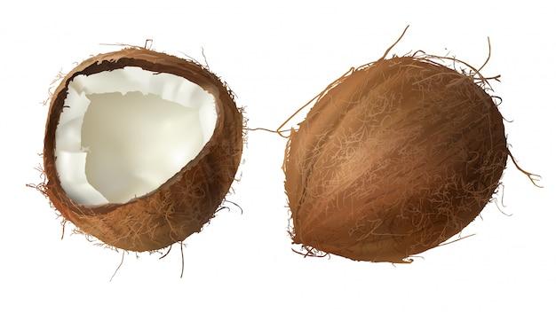ココナッツ全体と半分が壊れています 無料ベクター