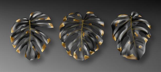 熱帯の黒と金のモンステラの葉 無料ベクター