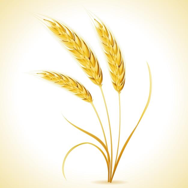 大麦の耳 Premiumベクター