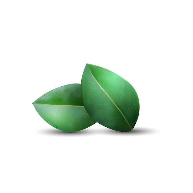 緑の葉、白い背景で隔離 Premiumベクター