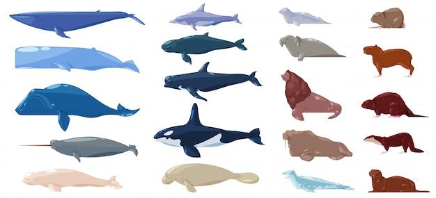 海の哺乳類水動物キャラクターイルカセイウチとクジラの海の生き物や海のイラストマリンセットアシカや海牛とシールやカワウソのイラストが白い背景に設定 Premiumベクター