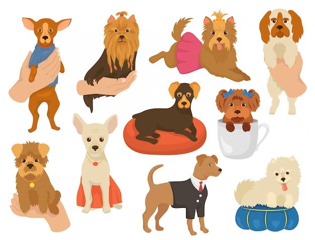 Маленькая собака маленькая собачка домашнее животное характер милый ошейник животное и домашний молодой щенок на руке иллюстрация собачий набор породы йоркширский друг чихуахуа, изолированных на белом фоне Premium векторы